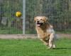 3 tipy pro pohyb bez bolesti i pro vašeho psa
