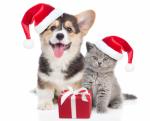 Co pořídit mazlíčkům k Vánocům?
