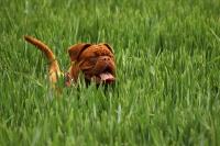 Krmiva pro psy bez obilovin