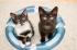 Testování mlíčka Brit Care Kitten Milk