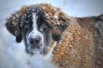 Jak pečovat o psy v zimě?