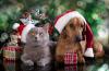 Vánoční dárky pro domácí mazlíčky