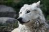 Carnilove: návrat k původní přirozenosti psů